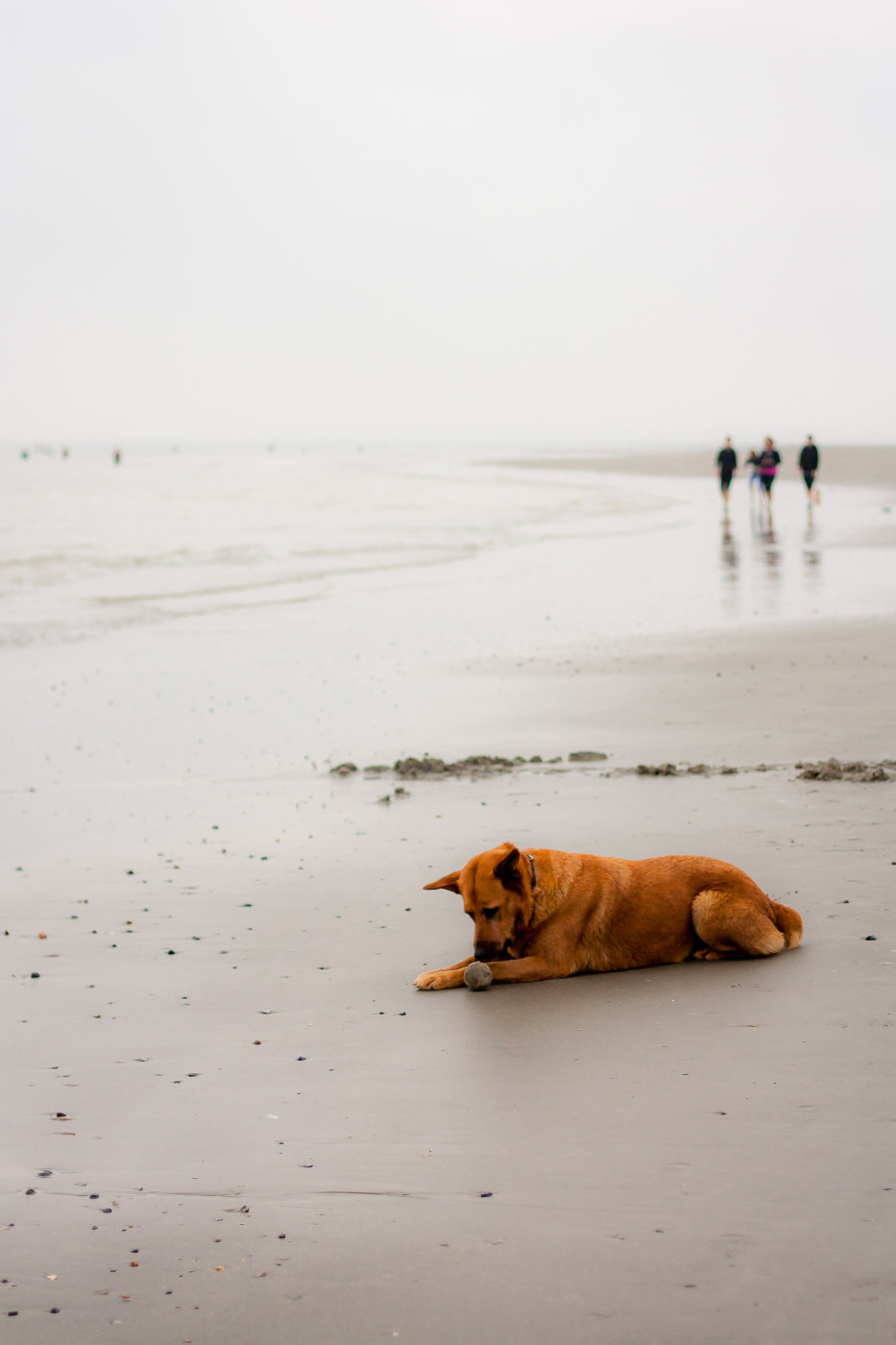 Les plages picardes et ses rencontres sympathiques!