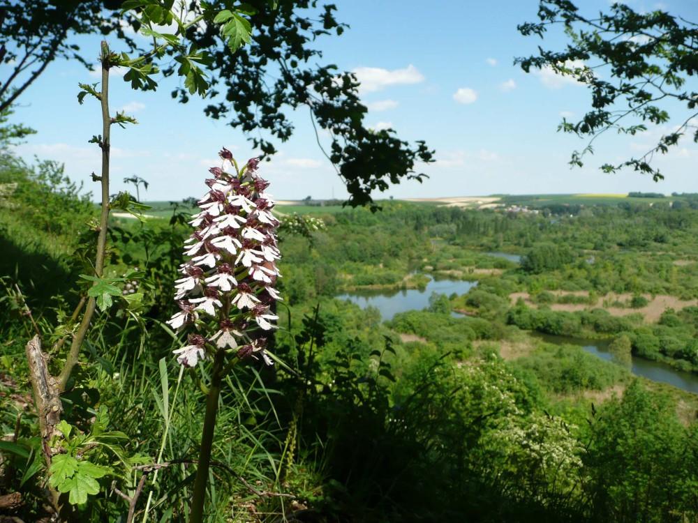 Le sentier des maguettes. Un des plus beaux larris qui domine les étangs de la Haute Somme. En mai on y rencontre l'Orchis pourpre, variété d'orchidée sauvage.