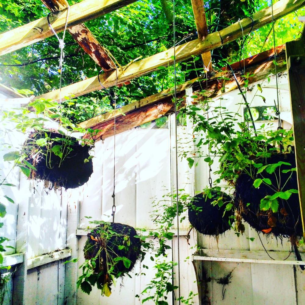 Jardins suspendus