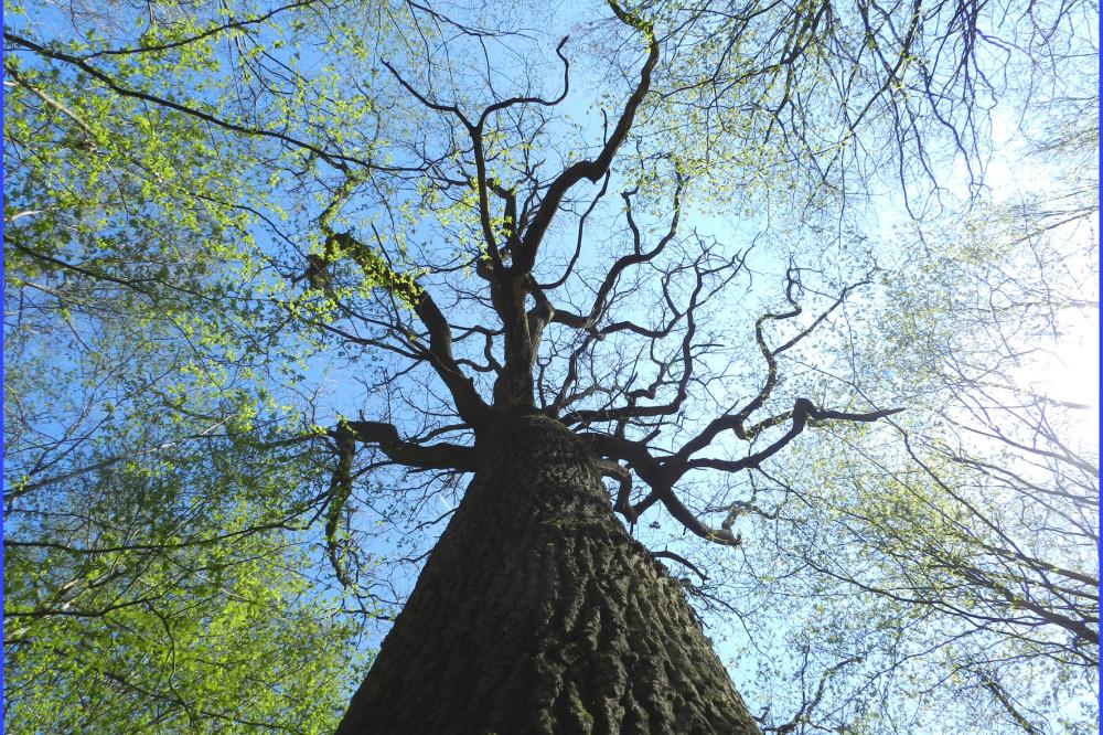 arbre avec ses tentacules amiens